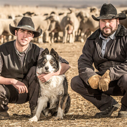 Albion Ridge Colony Lamb Farmers