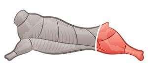 Sungold Specialty Meats Ltd. - Crossection Legs