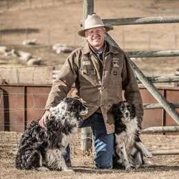Lamb Farmer with Sheep dogs