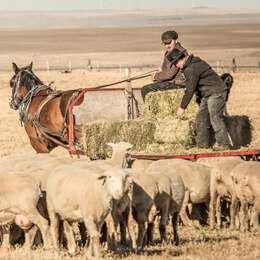 Gold Ridge Farming