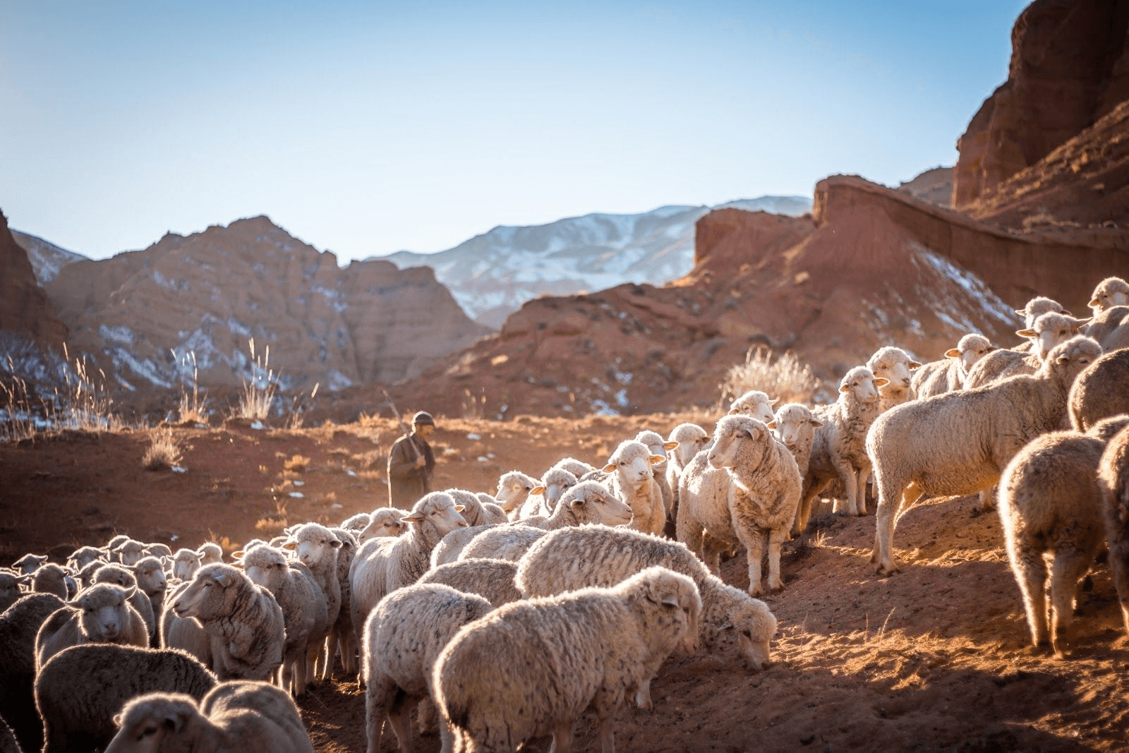 Sheep with shepherd in the mountains